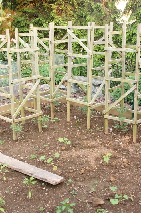 homemade tomato cages urban garden trellis tomato. Black Bedroom Furniture Sets. Home Design Ideas