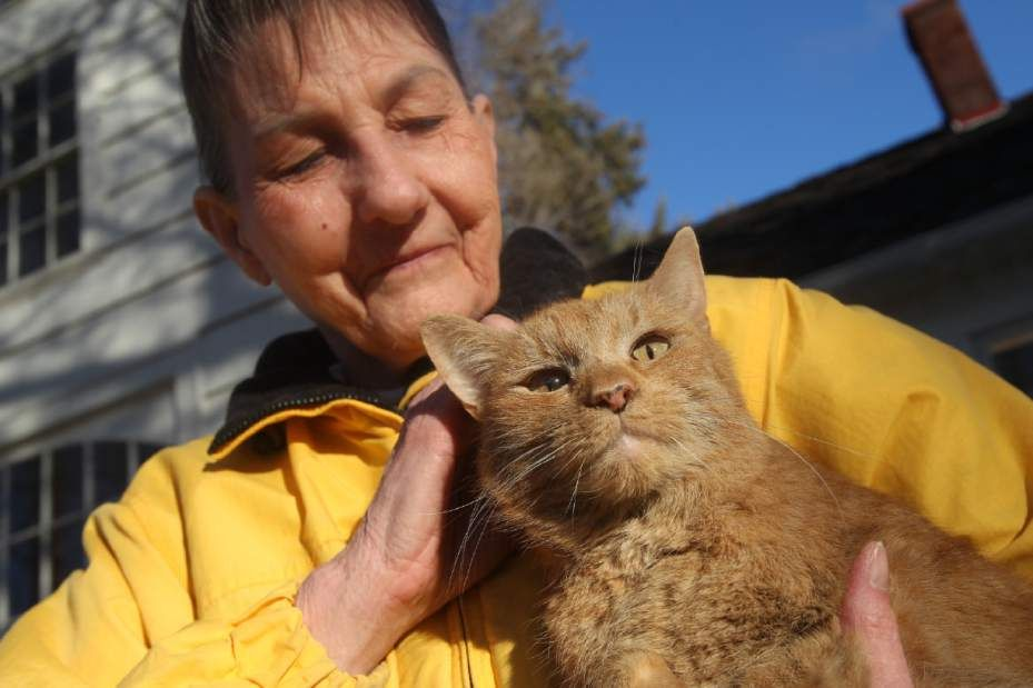 Cat thought tied to tree recovers Cats, Orange tabby