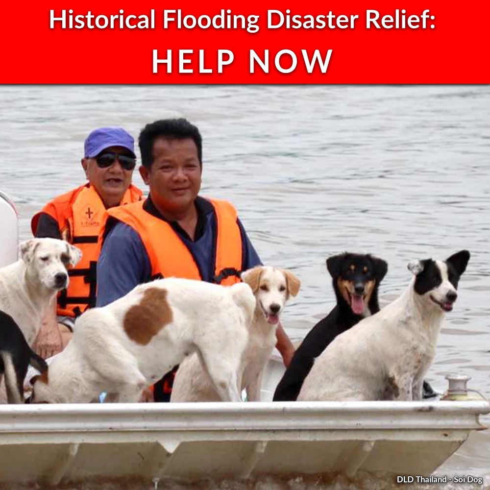 Record Flooding in Thailand: Help Rescue Pets Now #animalrescue