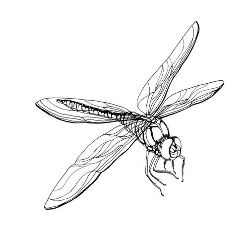 Free Printable Dragonfly Coloring Pages For Kids Coloring Pages Coloring Pages For Kids Dragonfly Wings