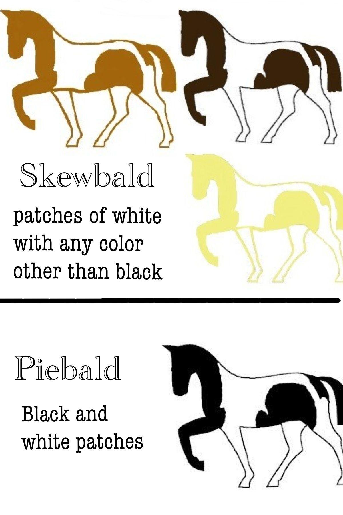 Terms for Paint horse coat coloration. | Equus | Pinterest | Painted ...