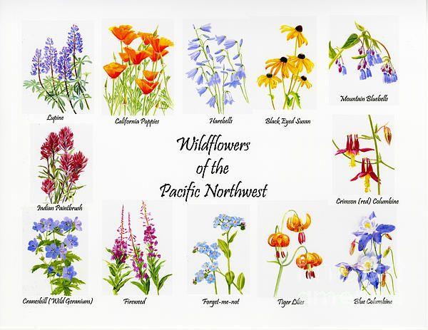 Wild Flowers Art | Fine Art America