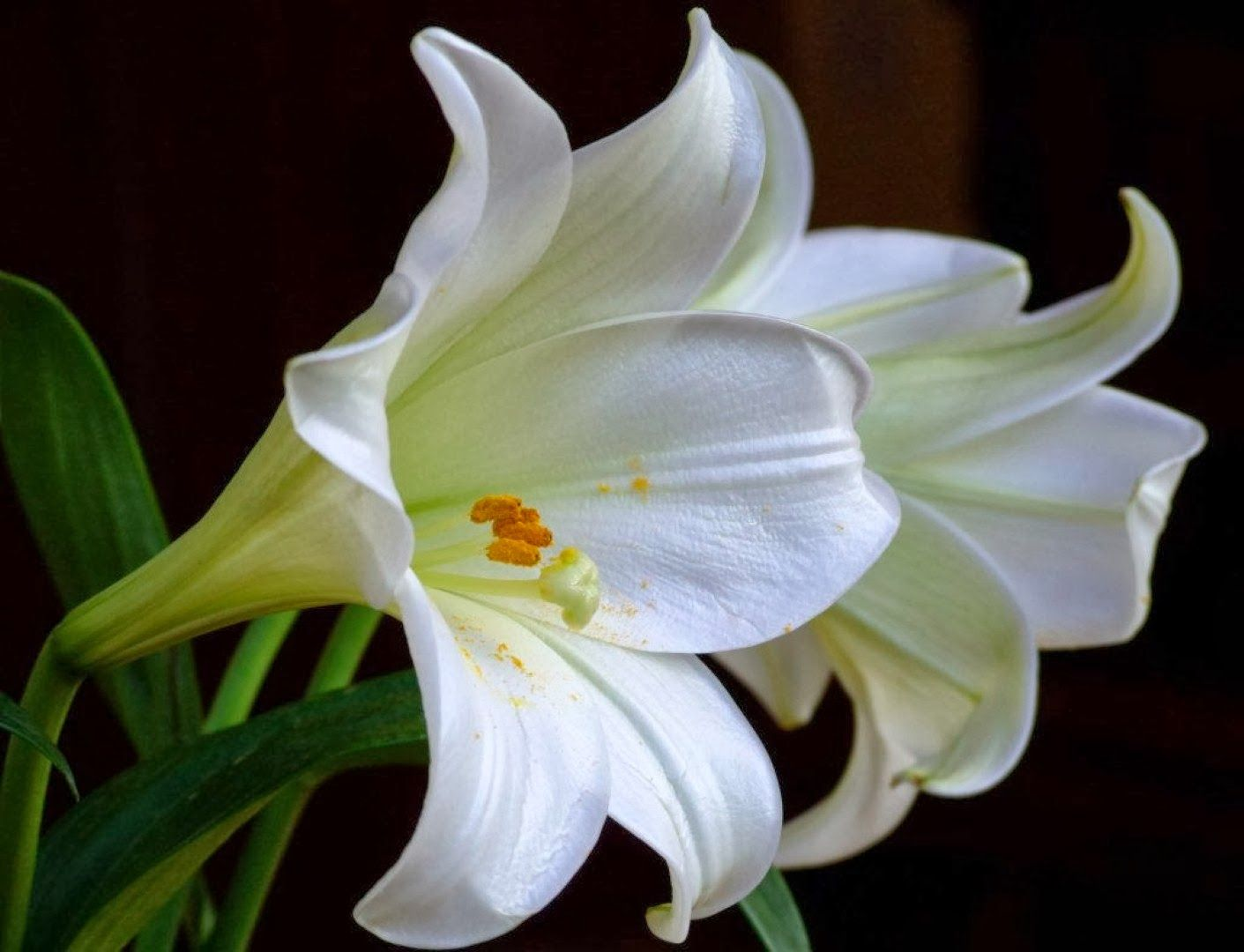 Kinds of flowers kinds of flowers pinterest flower wallpaper kinds of flowers izmirmasajfo