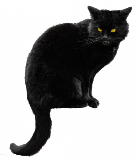 Black Cat Png Transparent Image Black Cat Pngget To Download Free Black Cat Png Vector Photo In Hd Quality With Black Cat Pictures Black Cat Halloween Cats