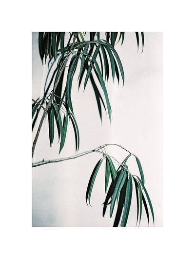 Filatures Maupetit #palms