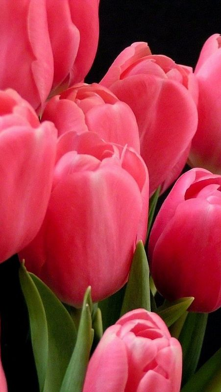 Tulips Flowers Bouquet Pink Leaves Background 22394 640x1136 Tulips Flowers Flowers Pretty Flowers