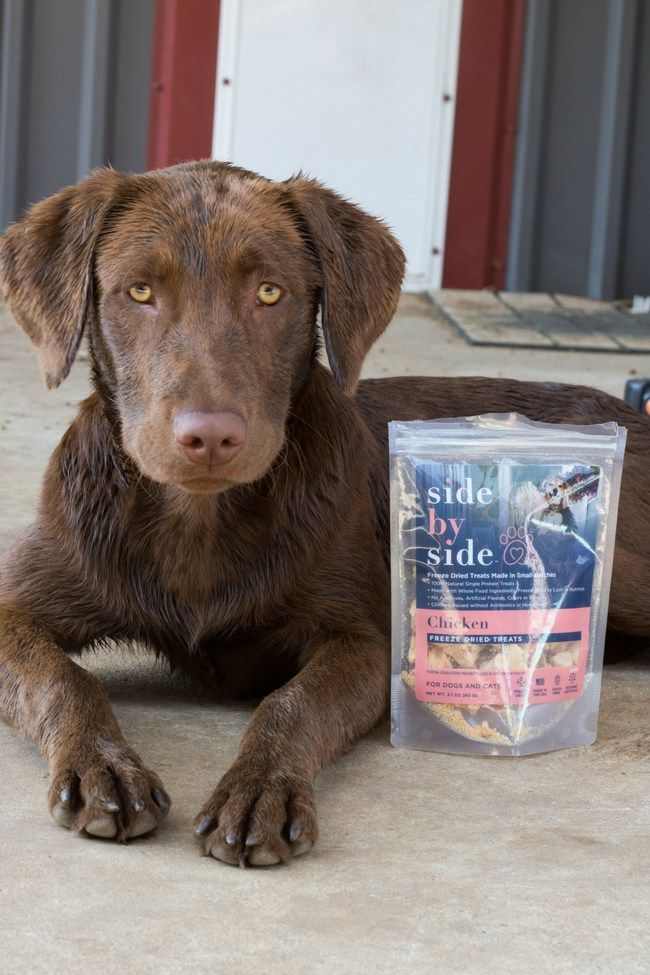 The Truth About Pet Nutrition Sunshine Momma Animal