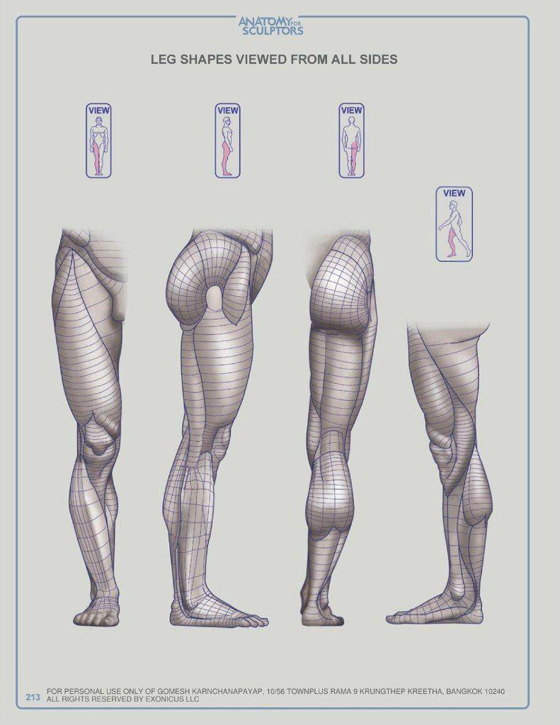 Pin by Ilona Shelest on ANATOMY | Pinterest | Anatomy, Anatomy ...