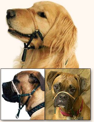 Comfort Trainer Head Halter Stop Dog Pulling Dogs Head Halter