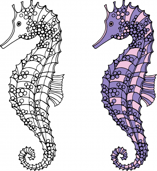 Seahorses Coloring Page  Male seahorse Seahorses and Miniatures