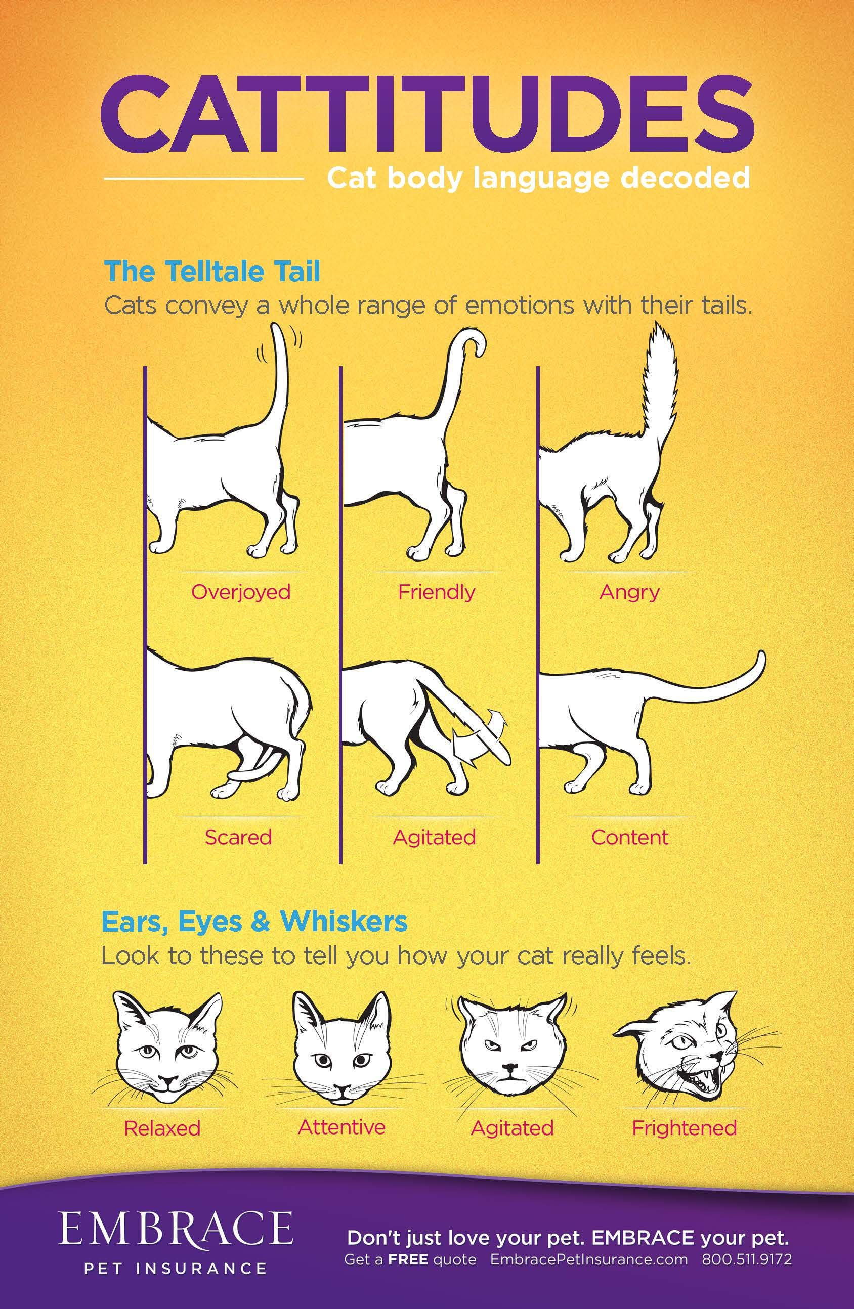 Learn to read your cat's body language! For more on cat
