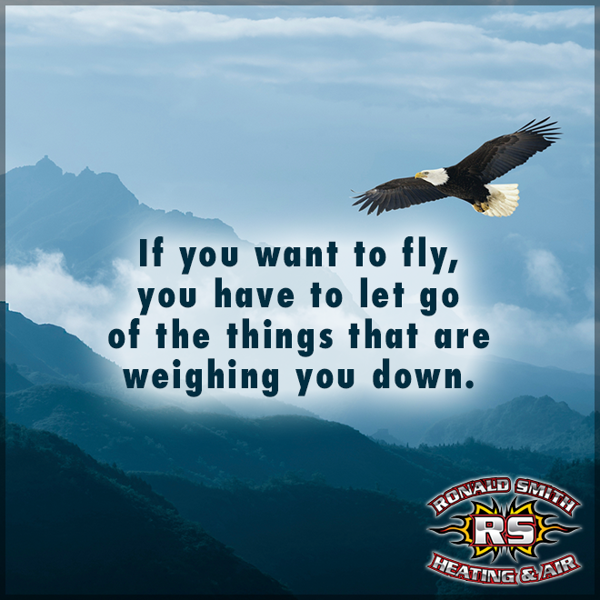 Let go! (With images) Let it be, Air heating, Bald eagle