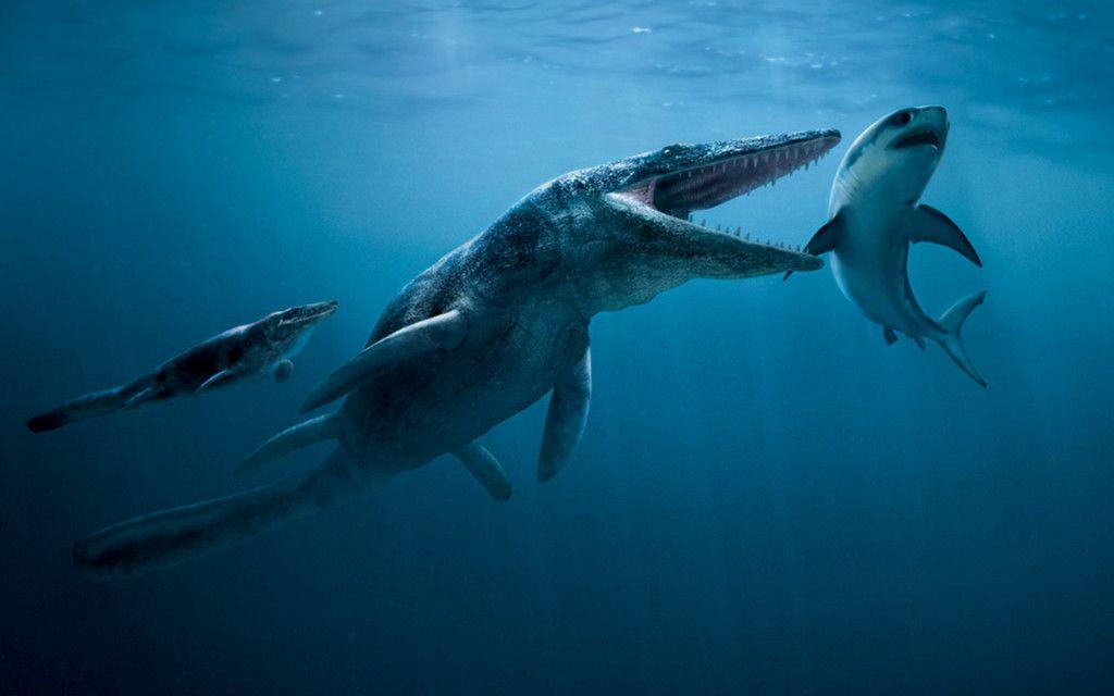 Megalodon Shark Hd Wallpaper 1080p Guilty Pleasure Pinterest