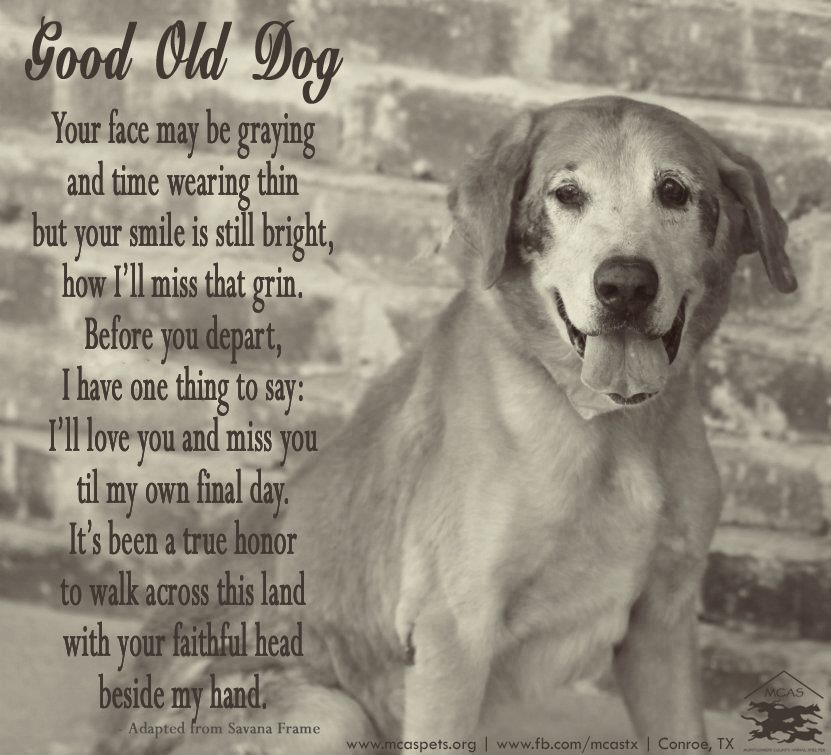 There Is No Greater Honor Than To Share Your Life And Love With A Best Dog Loss Quotes