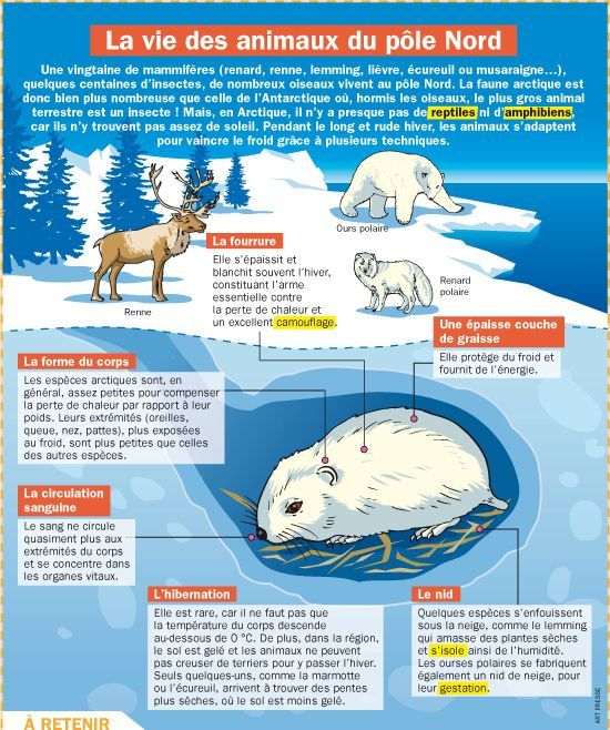 Affiche la vie des animaux du p le nord th me de l - Animaux pole nord ...