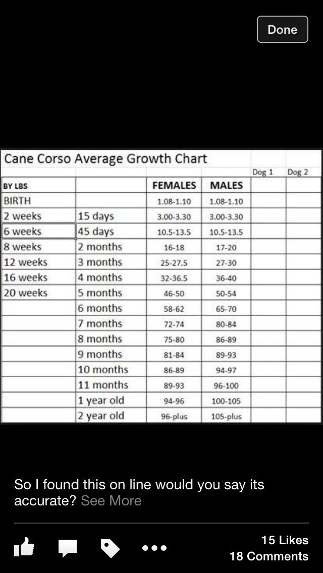 cane corso growth chart