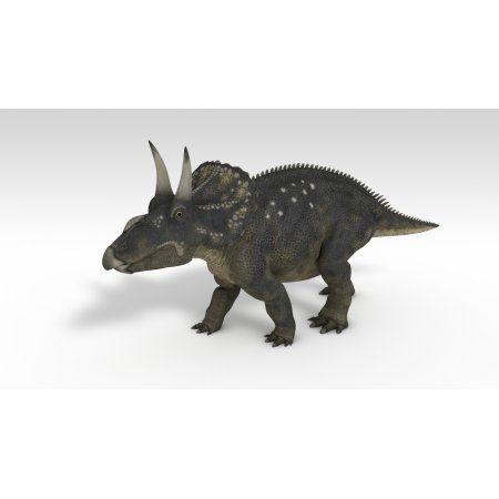 Triceratops dinosaur white background Canvas Art - Kostyantyn IvanyshenStocktrek Images (19 x 11)