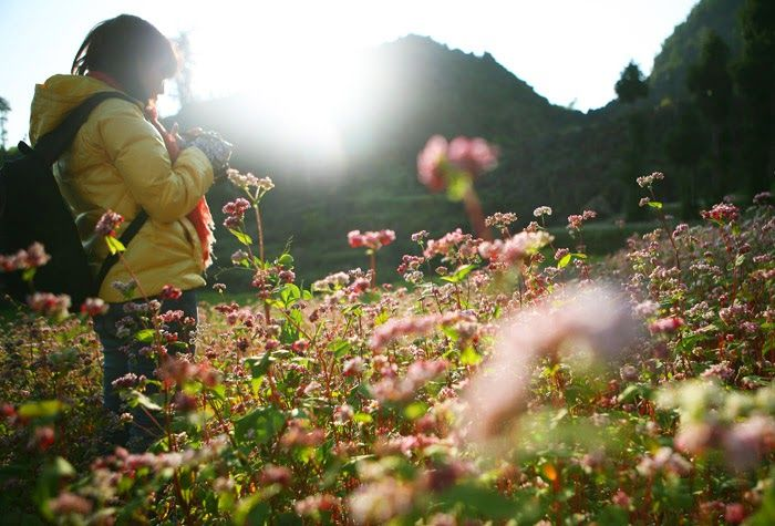 Flower season in Ha Giang http://vietnamtypicaltours.com/location/ha-giang-tours/