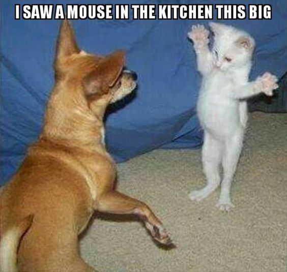 i saw a mouse... — Steemit