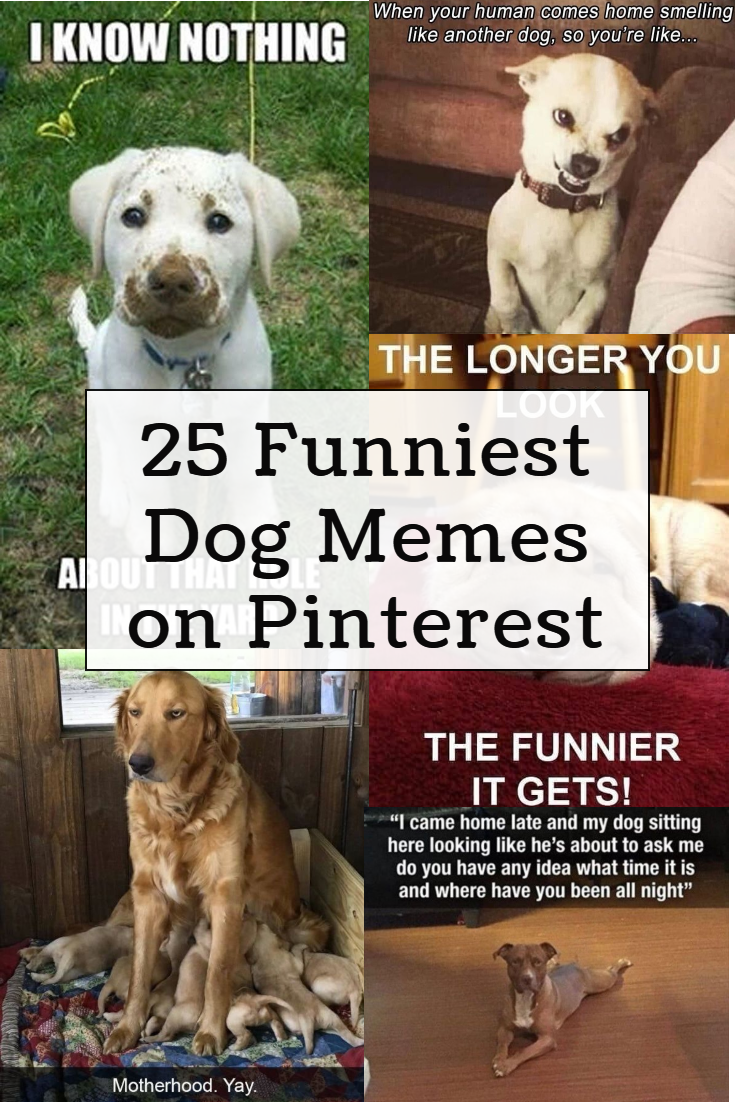 Here S The Funniest Dog Memes You Ll See On Pinterest Funny Dog Memes Funny Dogs Funny Dog Pictures