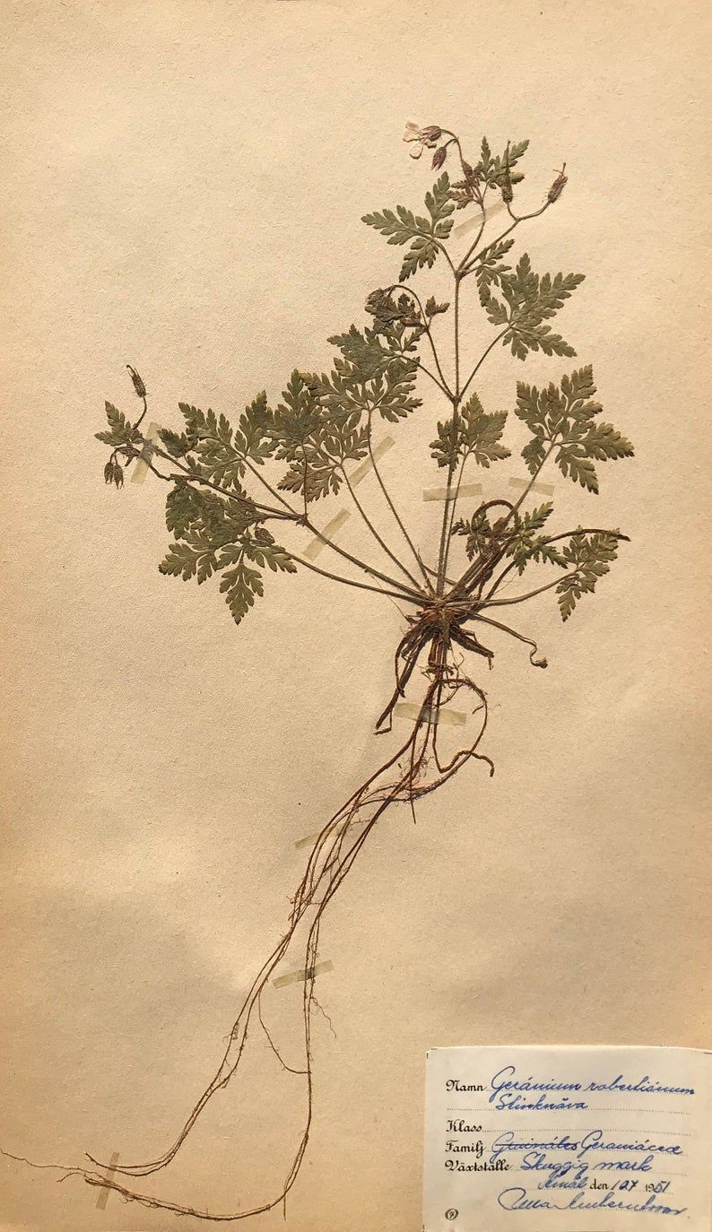 Herbarium pressed flowers botanical art  418 image 0  #homedecor #homedecoration #homedecorating #homedecore #homedecorations #homedecorideas #reforma #decor #decoration #decora #decorando #designdeinteriores #designerdeinteriores  #interiordesign #apartament #homedecorlovers #homedecorblogger #homedecors #homedecorator #homedecorinspo  interiordesignideas #interiordesign #interior #design #ideas