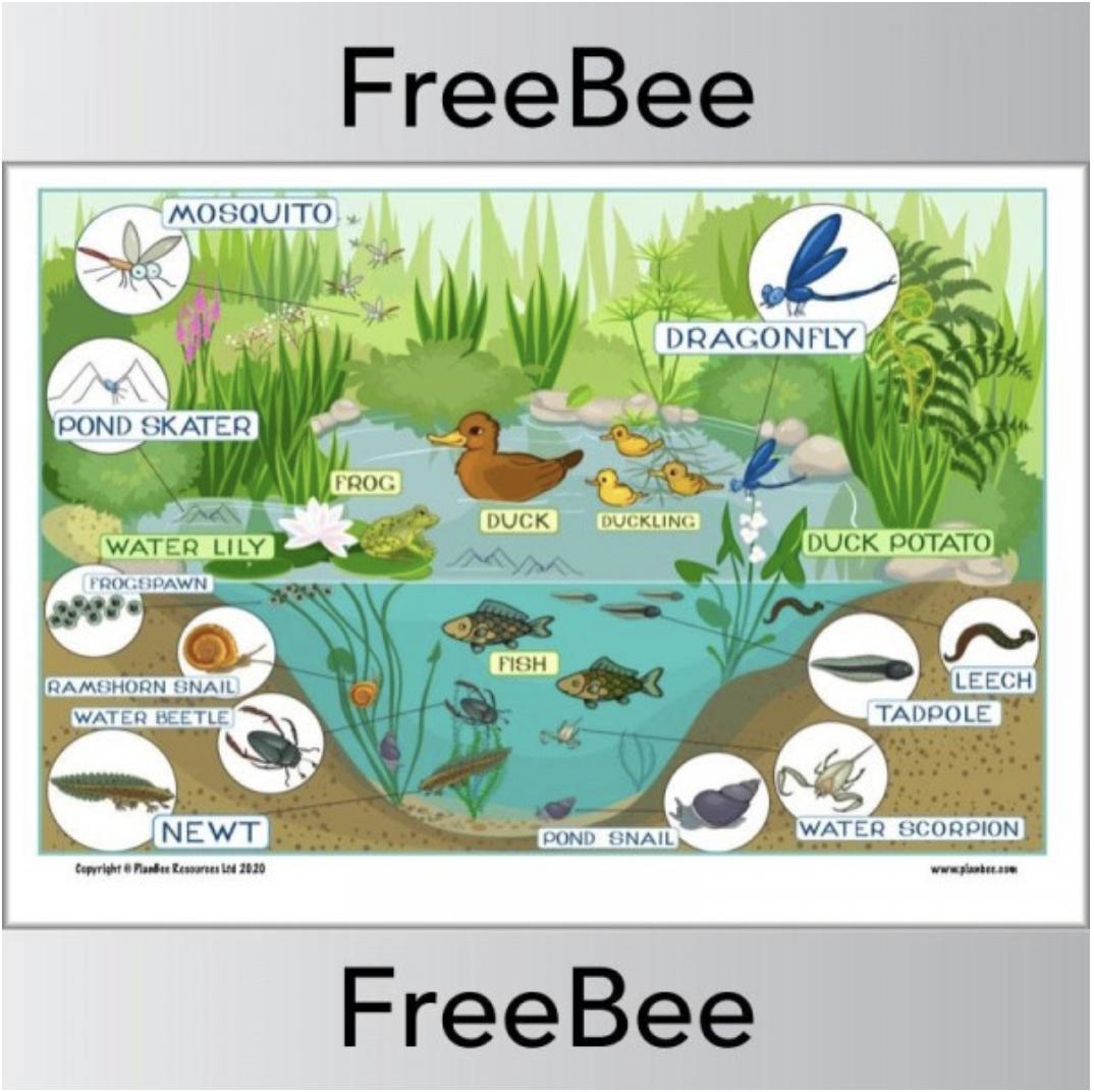 Pond Habitat Ks1 Poster And Worksheet Pond Habitat Ecosystems Ecosystems Projects