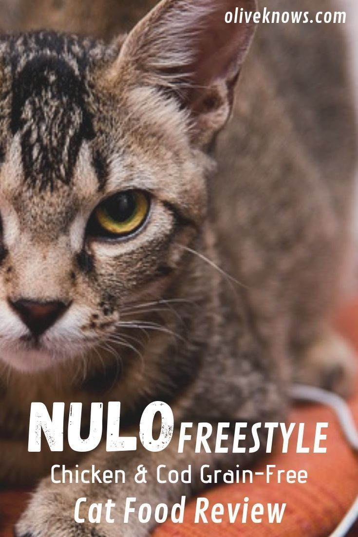 Nulo freestyle chicken cod grainfree cat food review