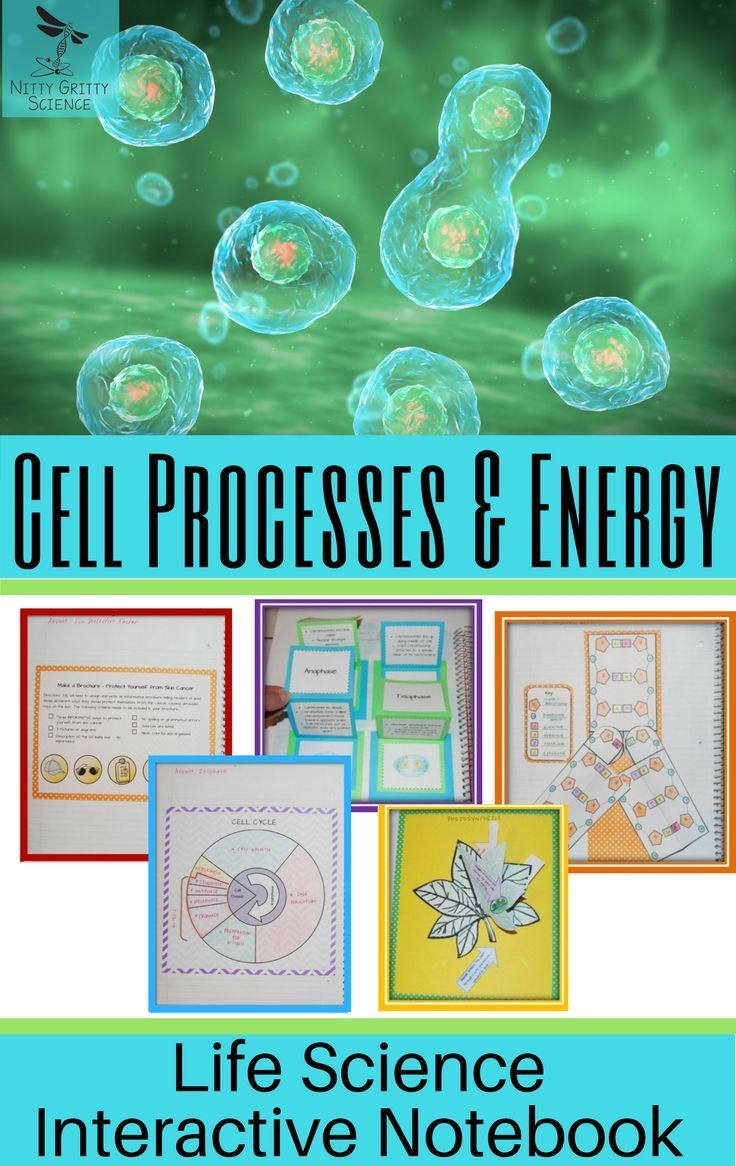 Photosynthesis cell process energy life science interactive photosynthesis cell process energy life science interactive notebook pooptronica