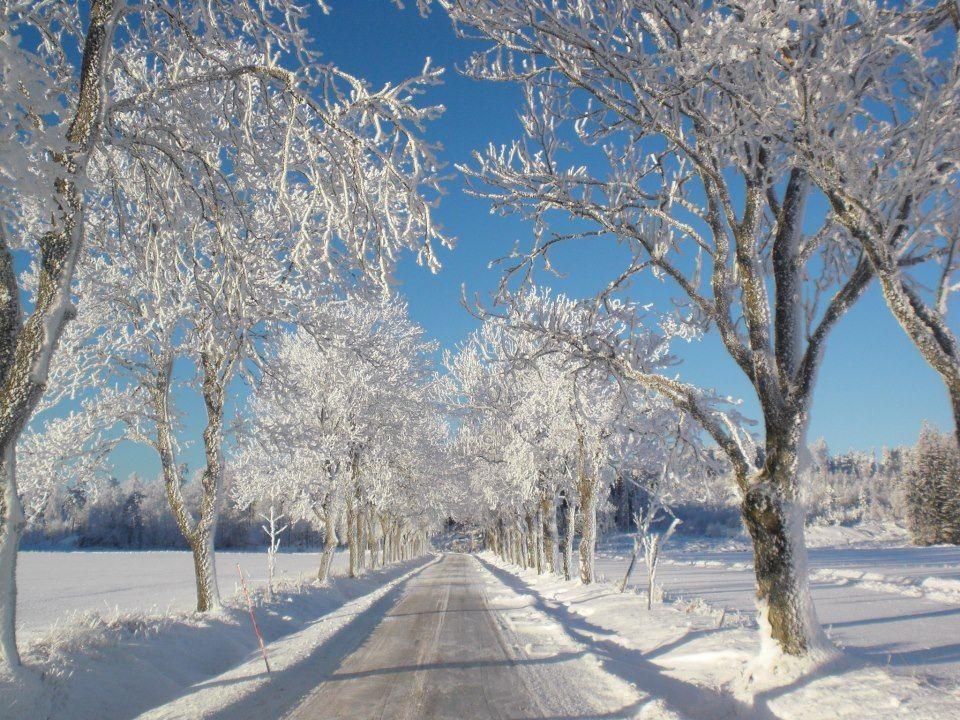 Camino en Invierno