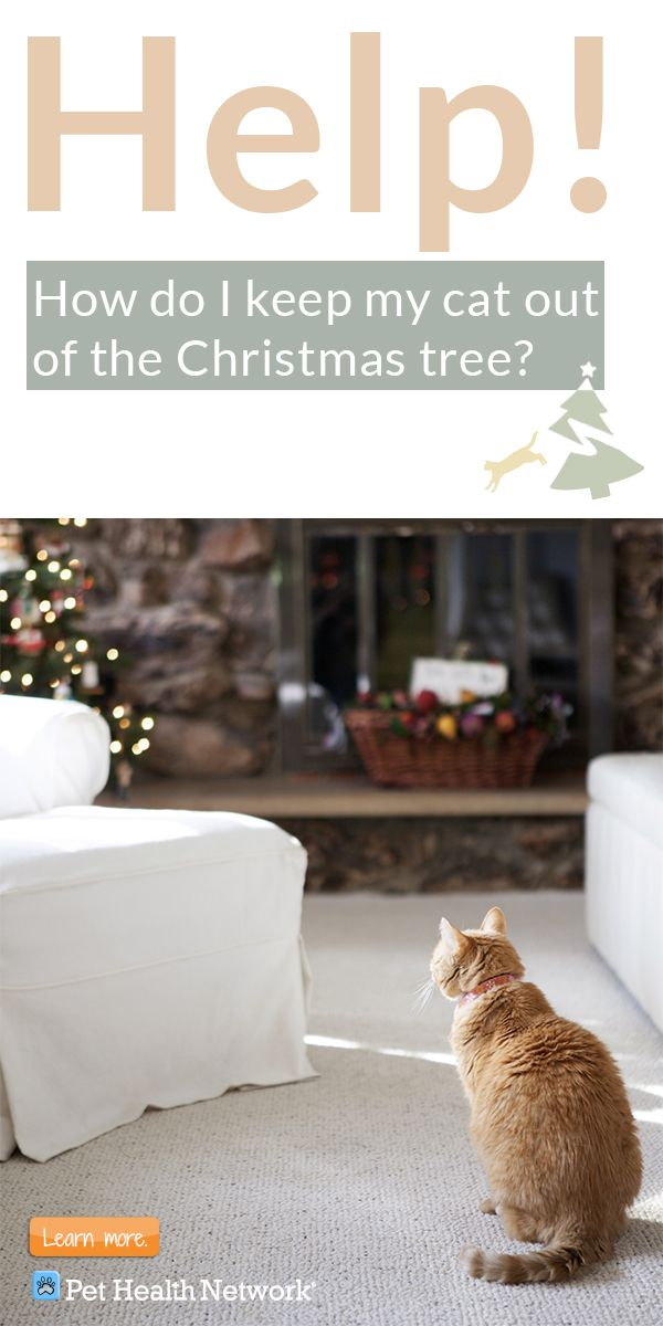 How do I keep my cat out of the Christmas tree? | Cats | Pinterest ...