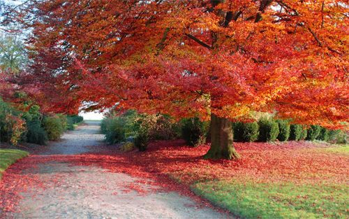 Fall Scenes 30 Absolutely Spectacular Autumn Wallpaper For