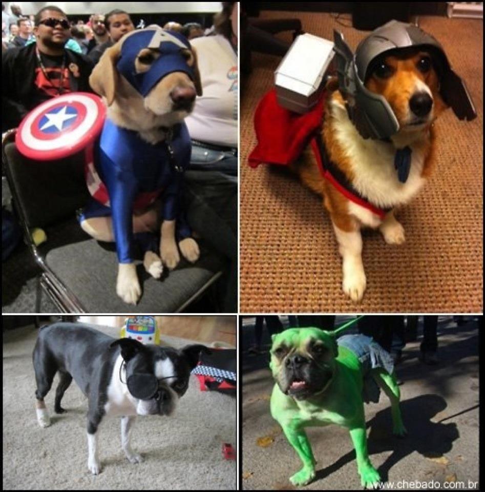 Avengers Dogs