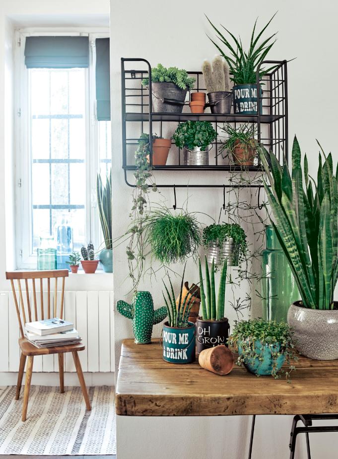La Maison Un Oasis De Verdure Truffaut Plante Interieur Vente De Plantes Plante