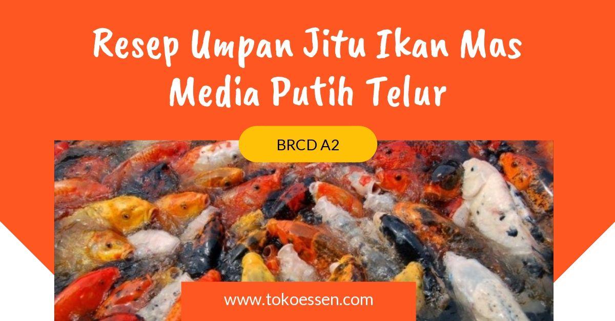 Resep Umpan Jitu Ikan Mas Media Putih Telur Food Vegetables Meat
