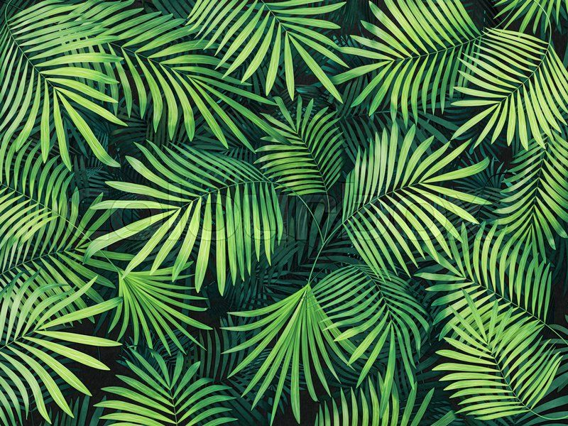 Green Tropical Leaves Background 3d Render Illustration Palm Trees Wallpaper Tree Wallpaper Tropical Background Pattern orchid hibiscus leaves watercolor tropics. pinterest