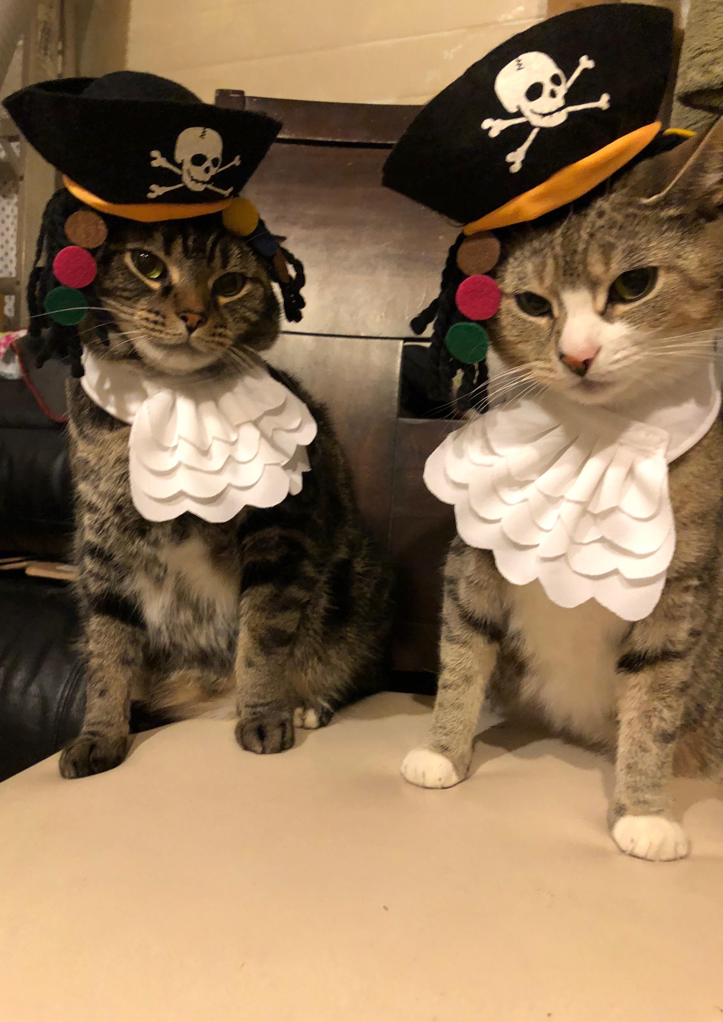 My Gf Did The Impossible And Got These Two Nut Jobs To Put On Costumes And Pose Music Indieartist Chicago Cute Cats And Kittens Cute Animals Foster Cat