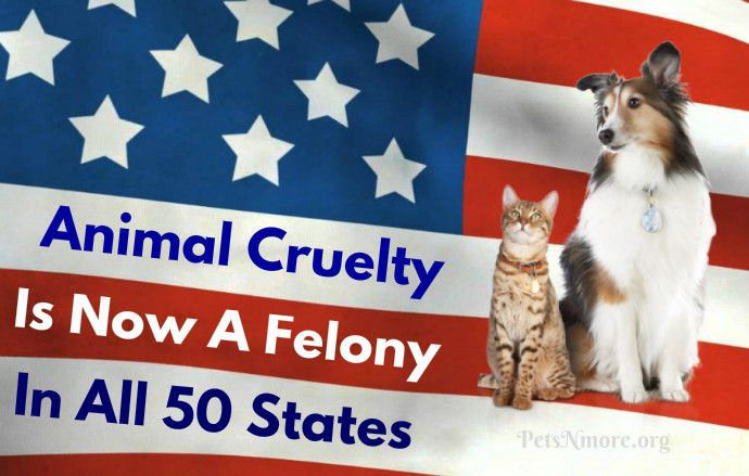 Excellent News Animal Cruelty Is Now A Felony In All 50 States Animal Cruelty Animals For Kids Animals