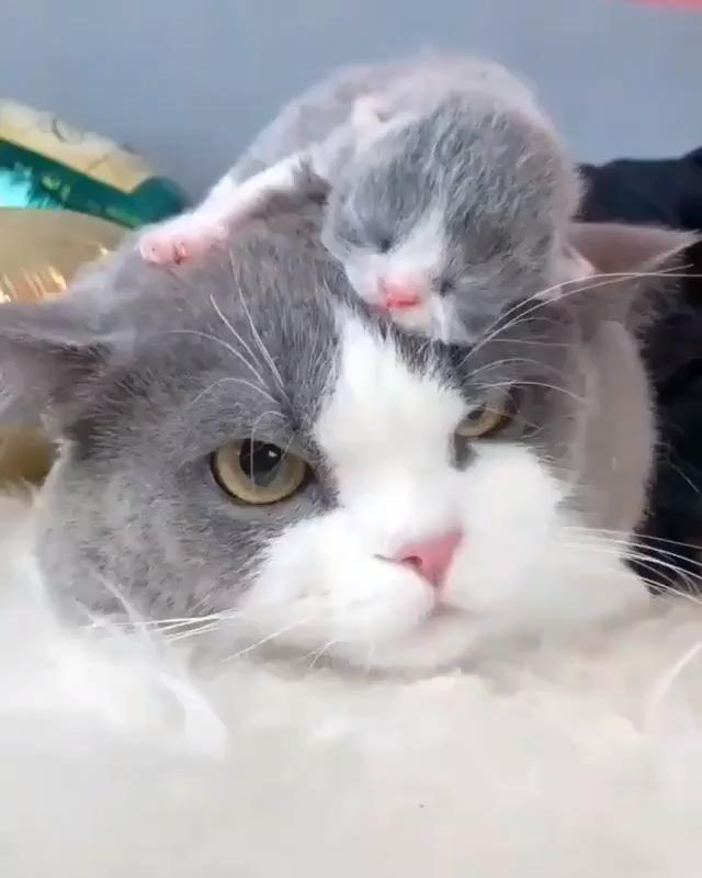 perfect spot catdrawing Cute animals, Cute baby animals