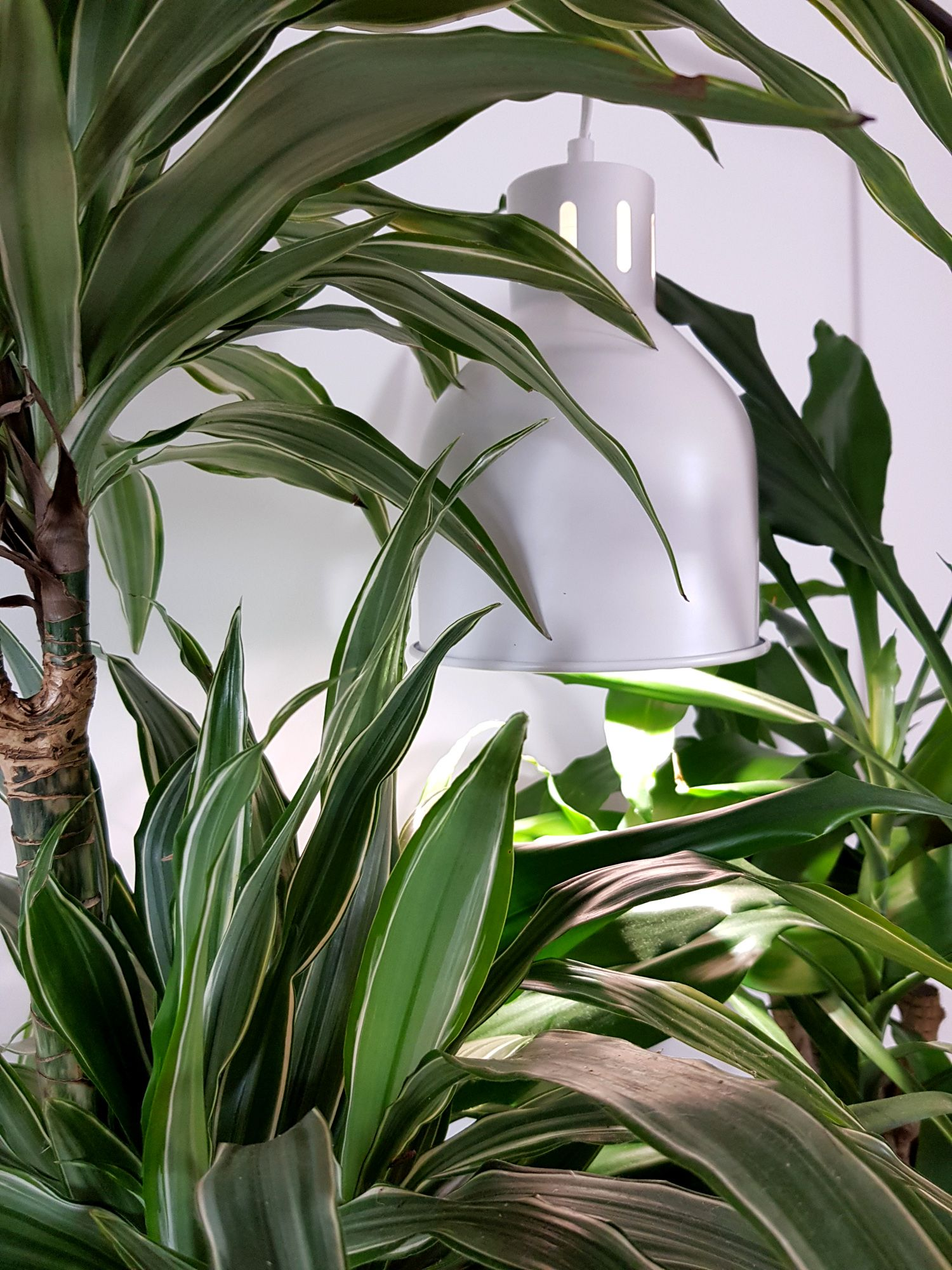 Da Wachst Der Urbanjungle Ja Glatt Uber Die Pflanzenlampe Hinaus Plant Leaves Plants Leaves