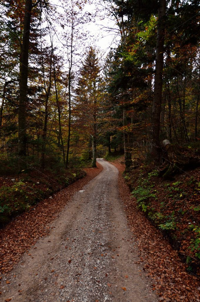 Check out Down the Autumn Road in Forest by PremiumCoding on Creative Market