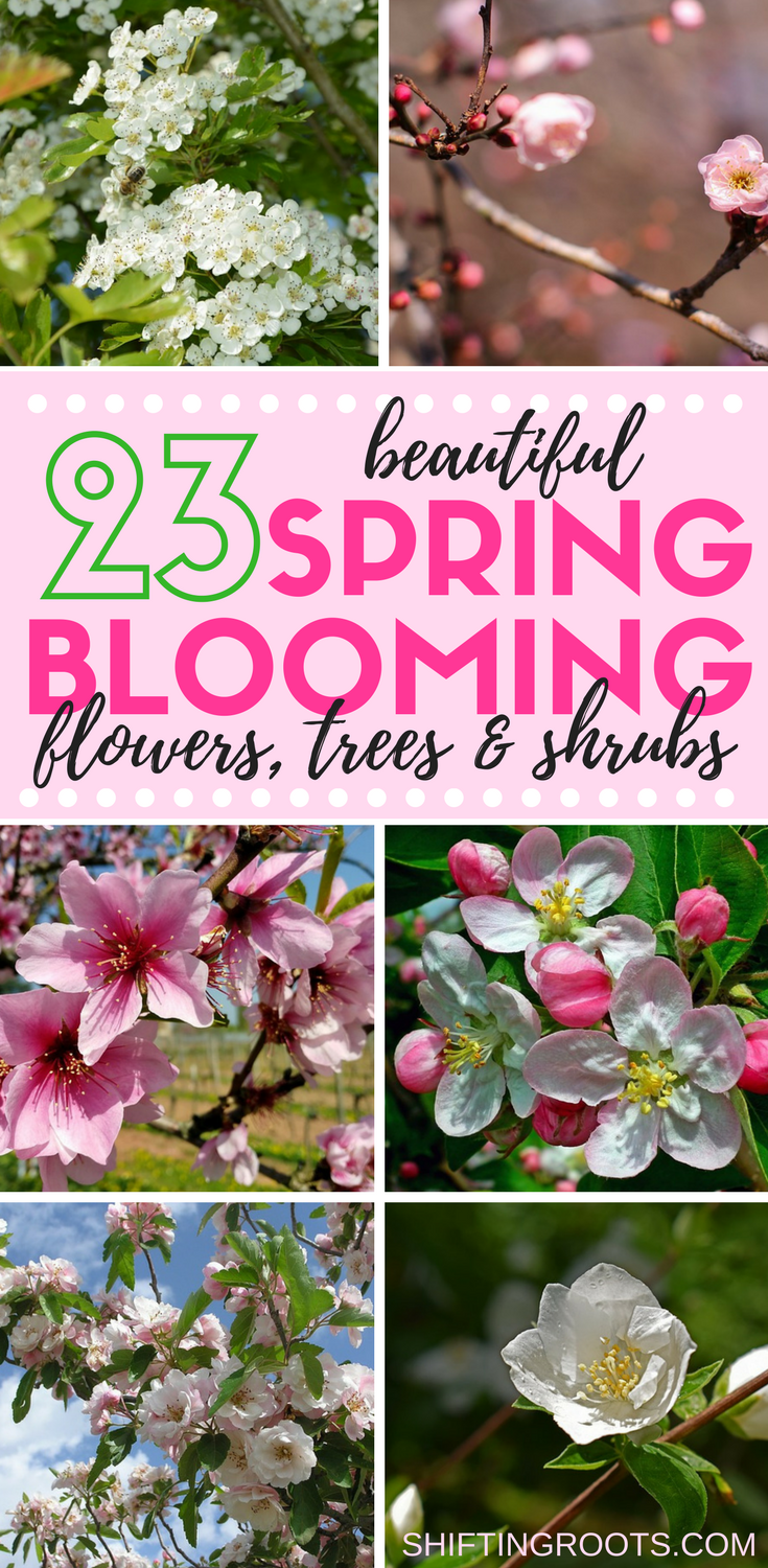 23 Beautiful Spring Blooming Perennial Flowers Trees And Shrubs