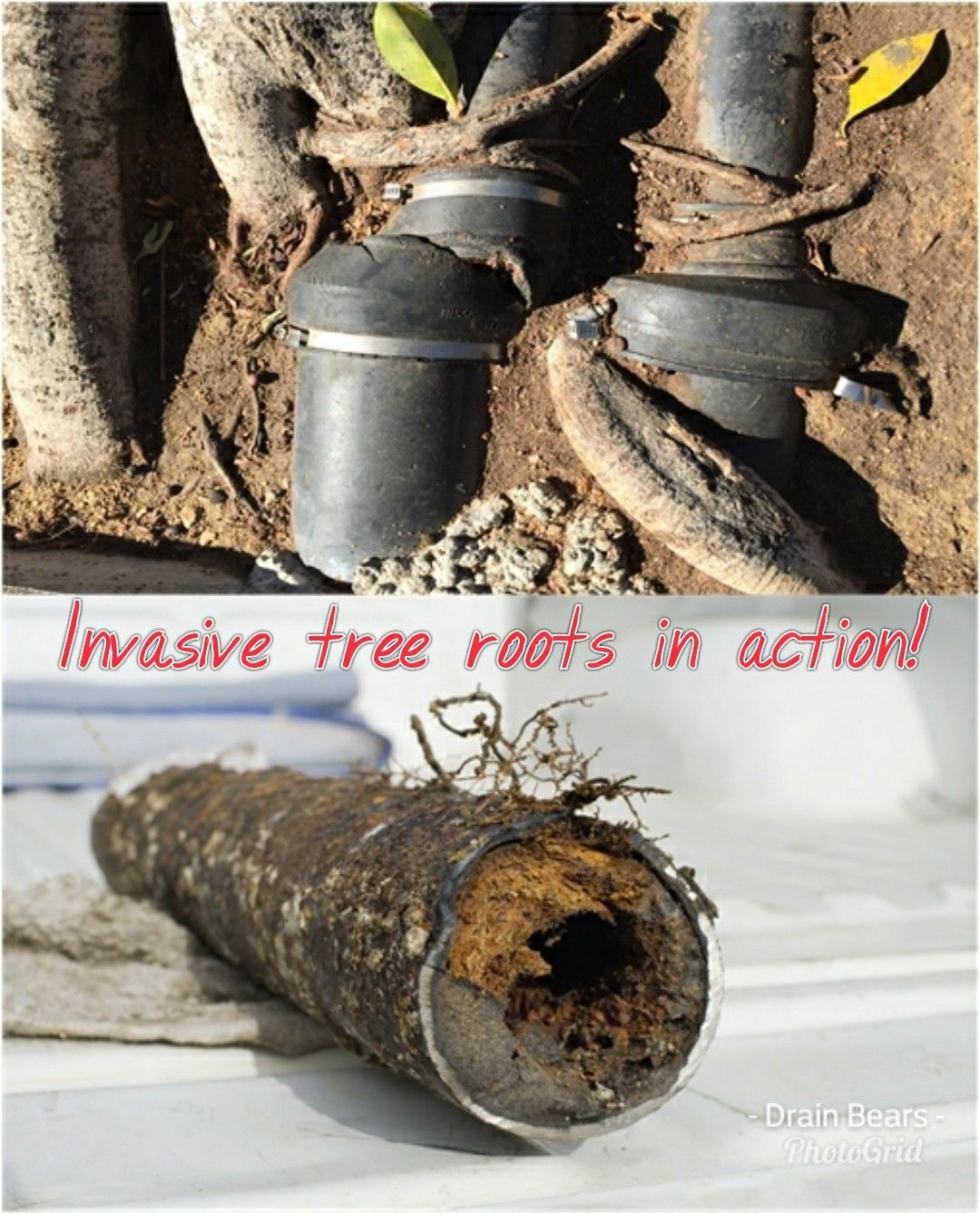 If you suspect that you might have invasive tree roots