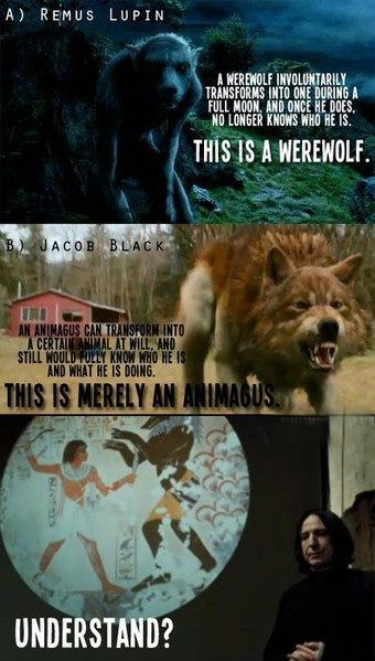 There are NO werewolves in Twilight. Stephanie Meyer is wrong. She will always be wrong. And Rowling will always be better.