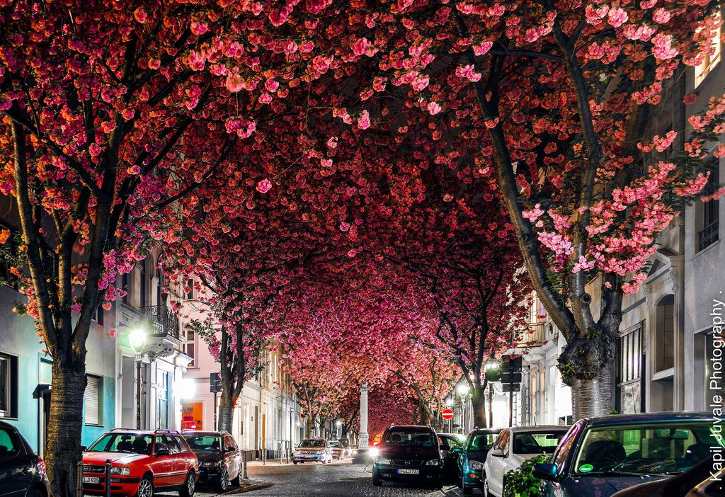 Blossom Street In Bonn Beautiful Destinations Wonderful Places Places To Go