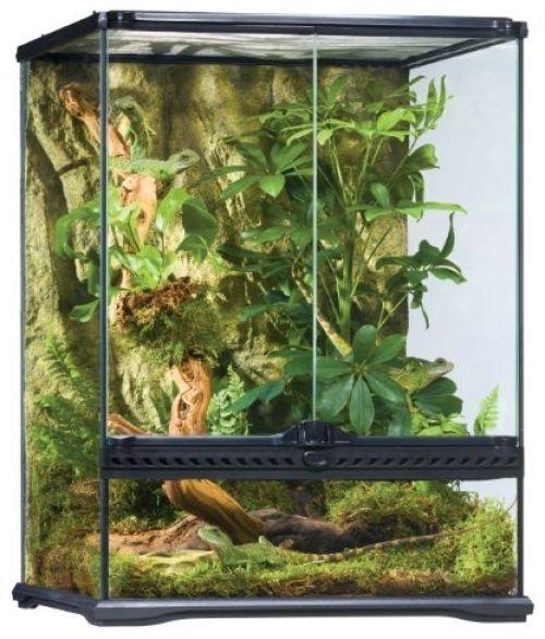 Rainforest Habitat Kit Exo Terra Reptile Small Pets Lizards Gecko
