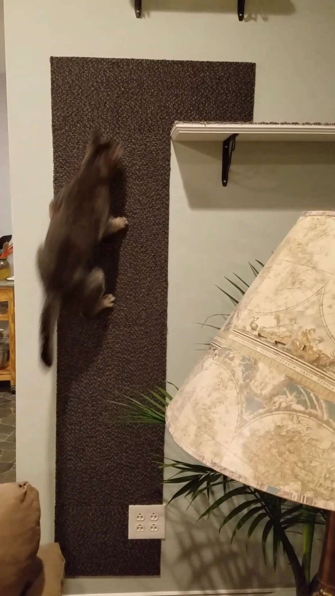Photo of Cat Climbing Wall