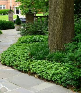 Landscaping Without Mulch Landscape Ideas Pinterest Mulch