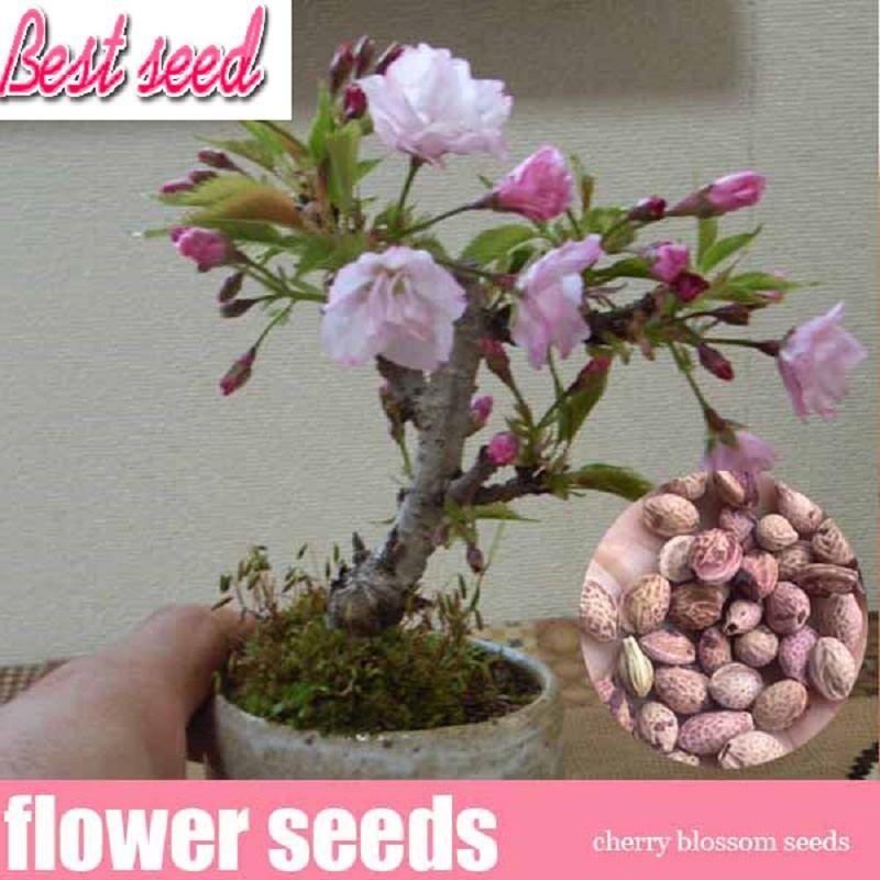 Silk Cherry Bonsai By Silkflowers Com Bonsai Tree Bonsai Plants Bonsai
