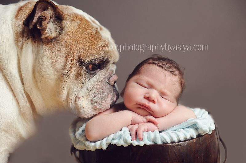 Cats with their baby newborn babies with their dogs cats