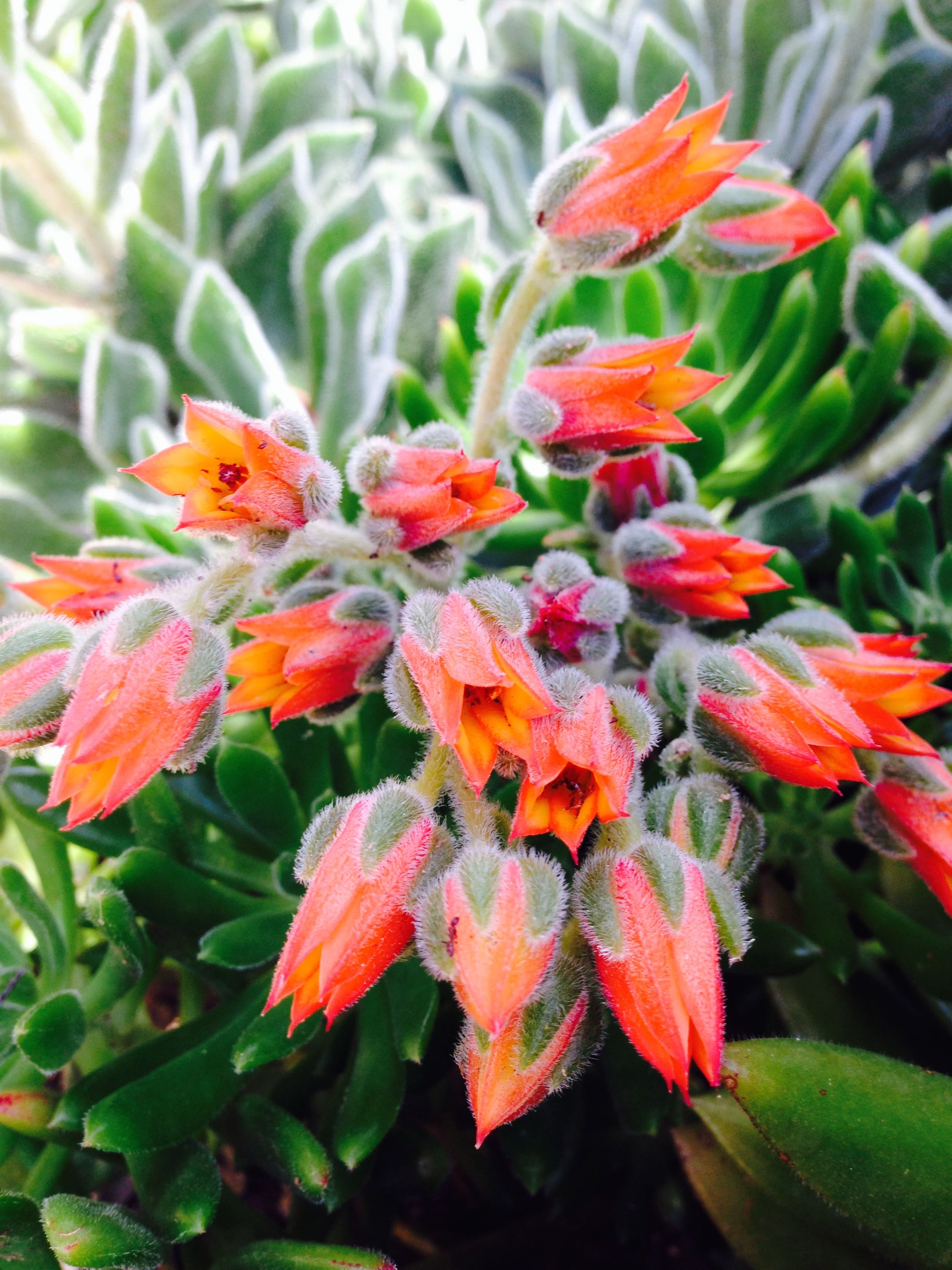 We Love Our Orange Flowers Produced By Velvety Soft Succulents Thank You Spring